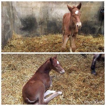 2e veulen geboren!!